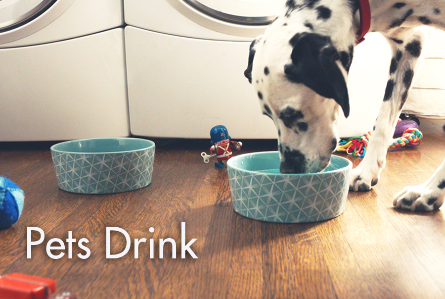 Pets Drink